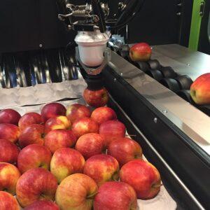 GREEFA SmartPackr verpakrobot voor appels